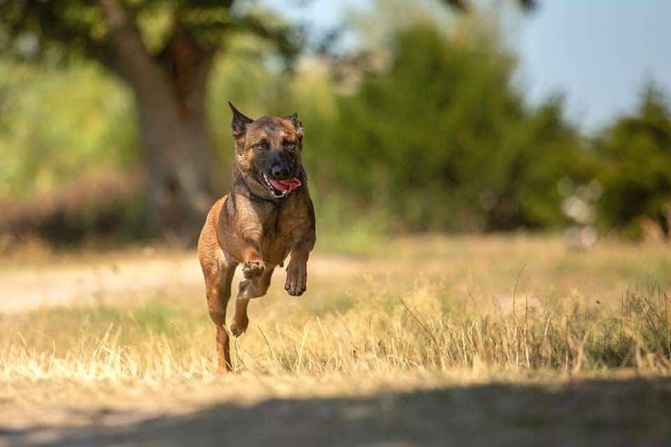 cours en ligne éducation canine