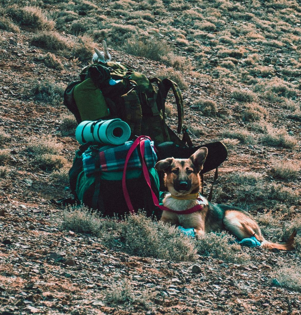 vacance camping chien