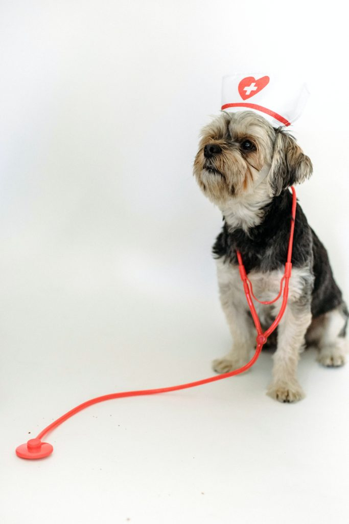 checkup véto avant les vacances pour ton chien