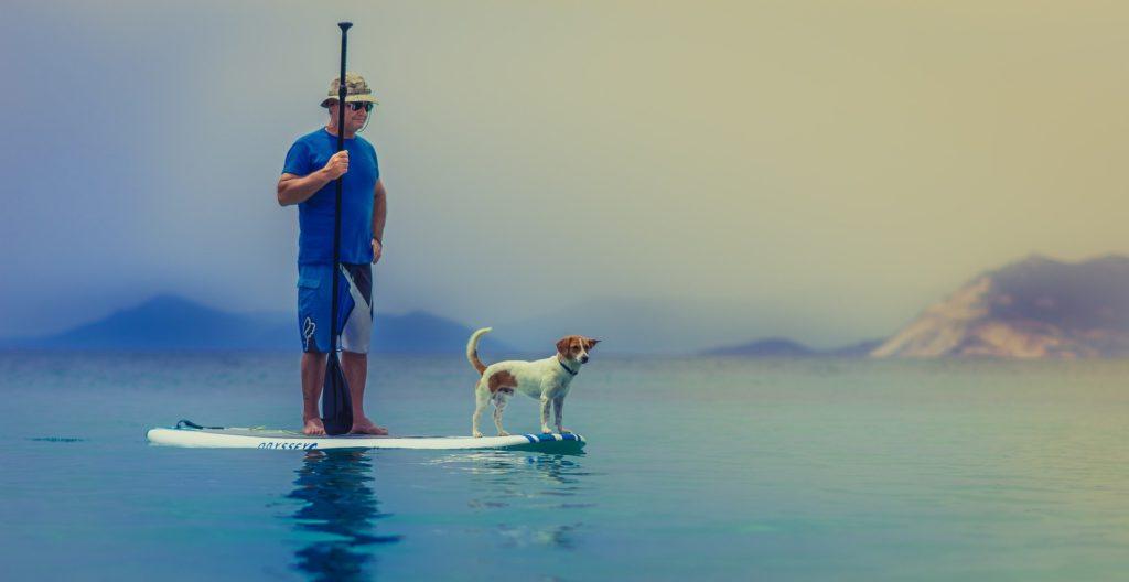 La mer en été un plaisir à partager avec son chien